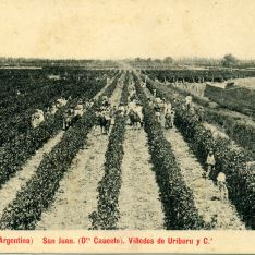 Viñedos de Uriburu y Cª