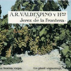 A.R. Valdespino y Hno.