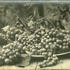 Racimos de uva